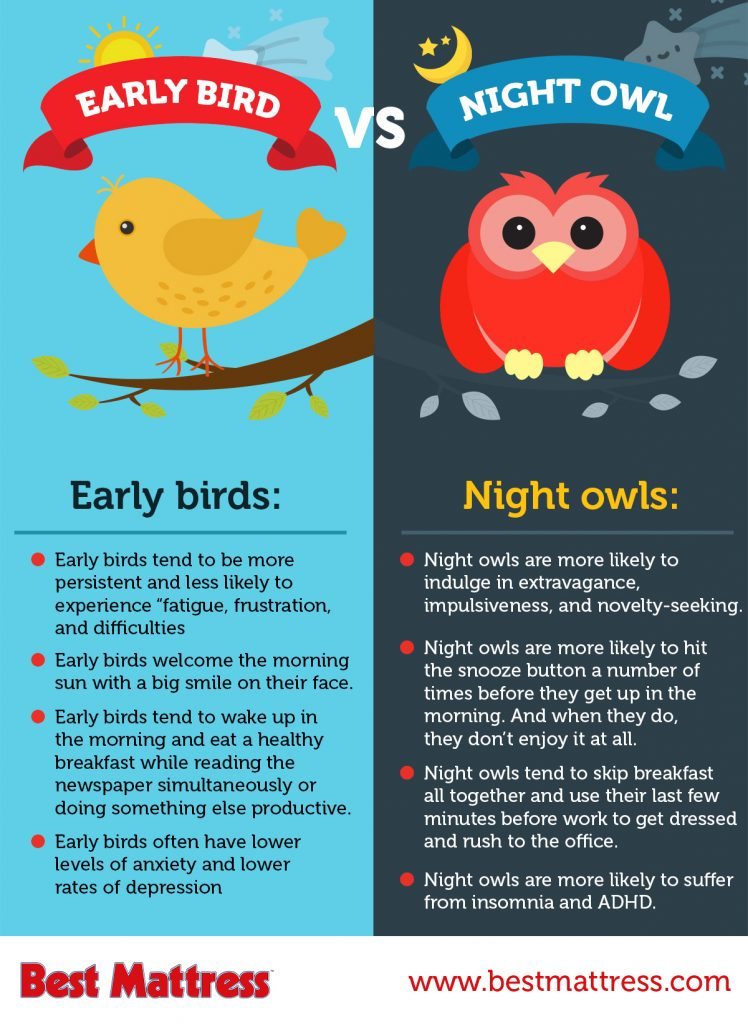 Are You An Early Bird Or A Night Owl Best Mattress