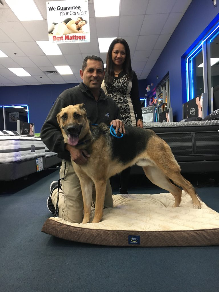 Kai, a german shepard, along with his new family. He was adopted from the NSPCA and Best Mattress gave them a new pet bed