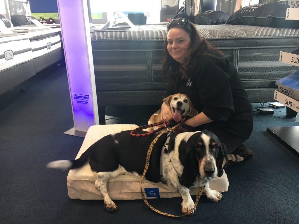 Conan the Beagle adopted by his Hu-MOM Kathy. They came to best mattress in las vegas to get a free pet bed because they adpoted through the NSPCA