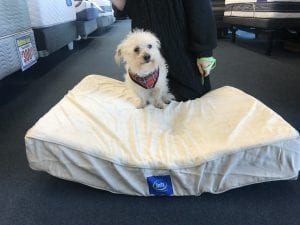Booger a poodle mix was adpoted with his best bud Rex and was given a serta pet bed from Best Mattress in Las Vegas